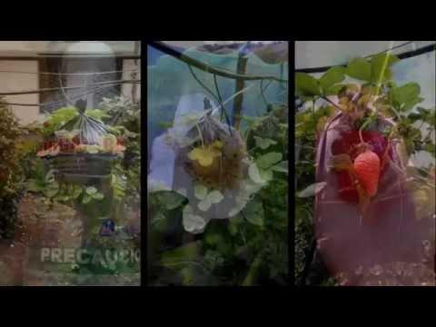 Decoragro hidroponia vertical de fresas