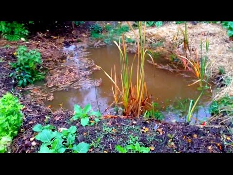 Permaculture Garden after HEAVY rain