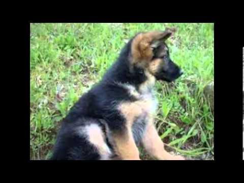 i cani pi belli del mondo youtube