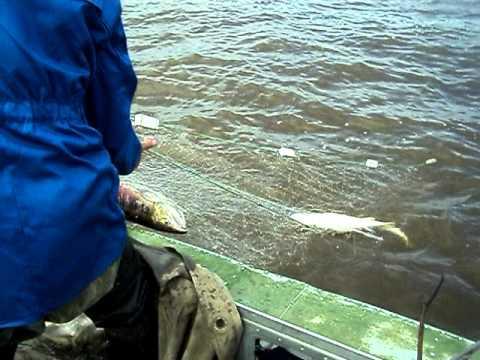 рыбалка сплавом сеткой видео