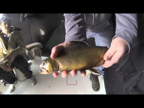 Ice fishing Brook Trout 2014 Nova Scotia Canada