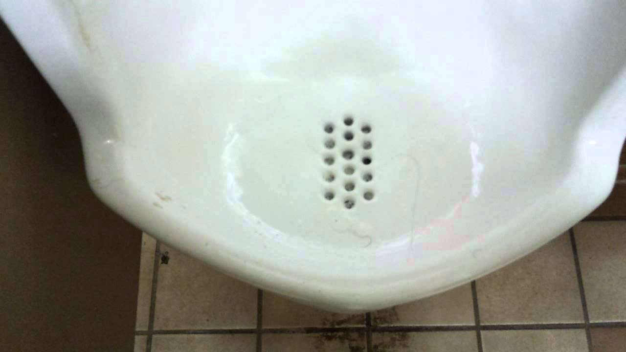 Bathroom Tour: Eljer Toilet and Urinal at the Car shop