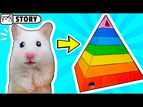 My Funny Pet Hamster in Rainbow Pyramid Maze / Hamster Pyramid Playground