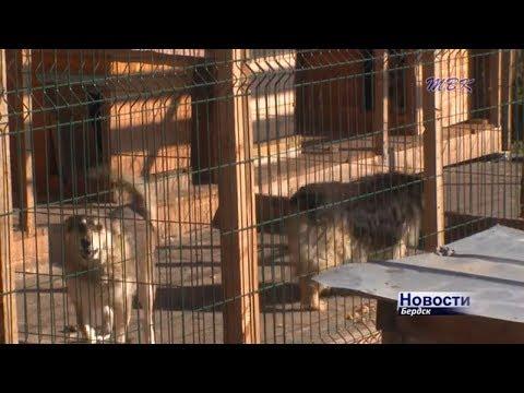 На отлов и содержание бродячих собак поступили деньги в бюджет Бердска