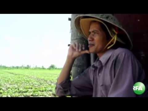 Nông dân khốn đốn vì thương lái Trung Quốc