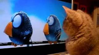 Kitten Watches A Cartoon On Computer