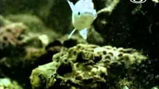 Zvierací rekordmani - Najjedovatejší