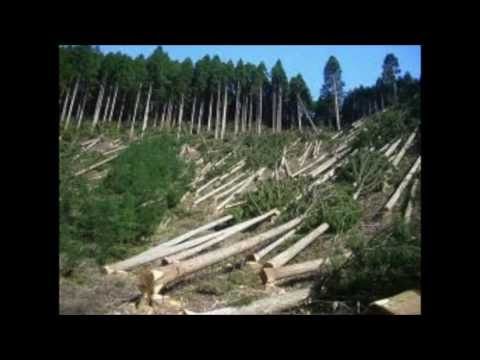 Human Affect On The Environment Wake Up call