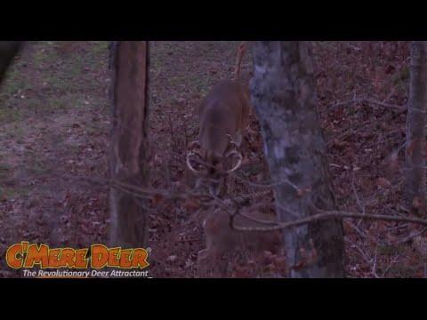 C'Mere Deer - Stop Here Deer