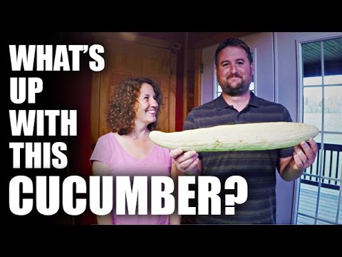GGC - 65 - What's Up With This Cucumber?