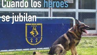 ¿Qué ocurre con los perros policía cuando se jubilan?