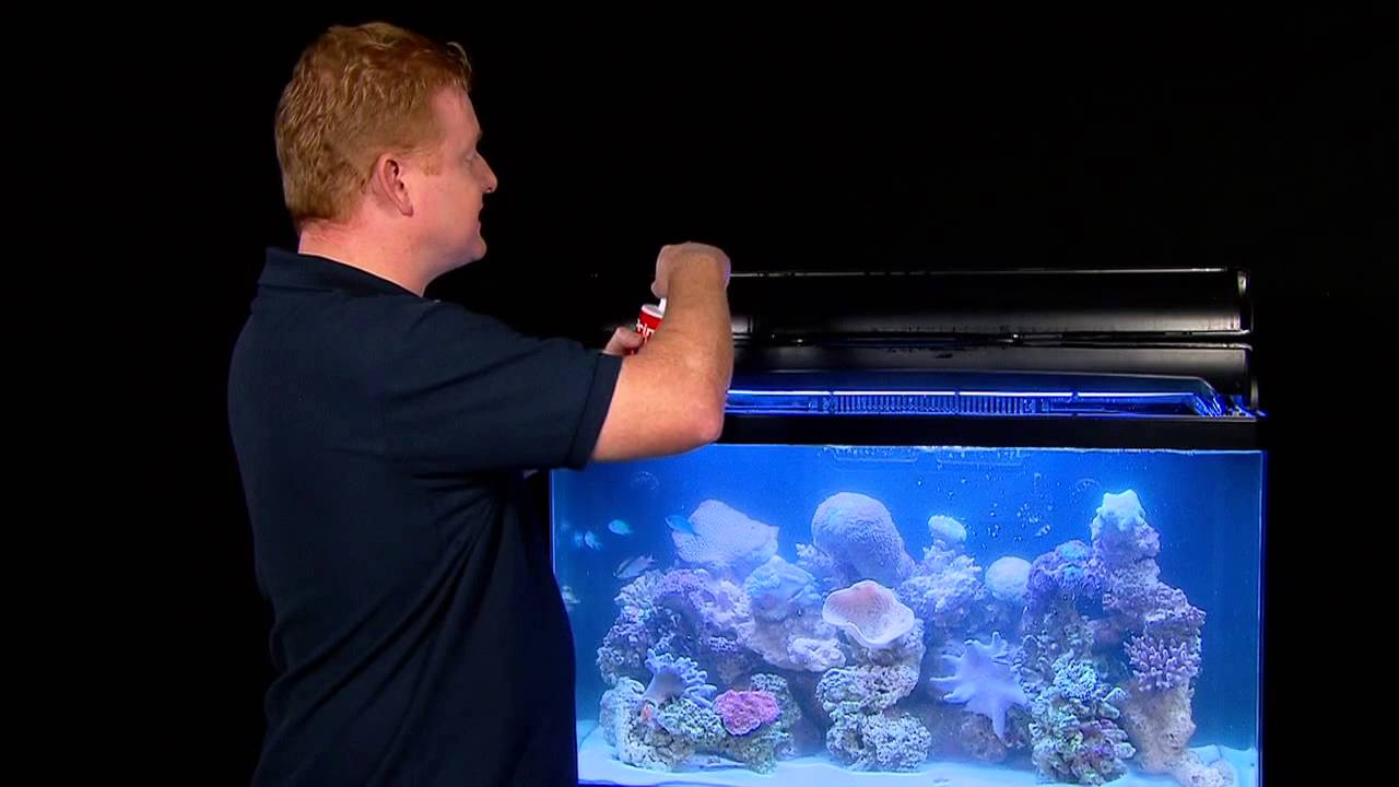 How To Save Your Tank With Seachem Prime Fish Tails With