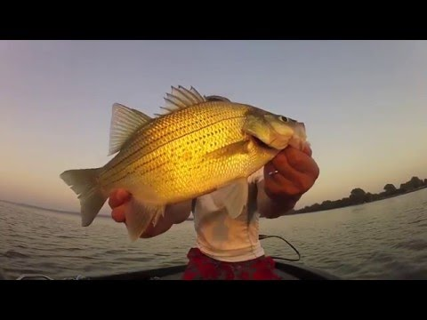 Summer White Bass Fishing 2013