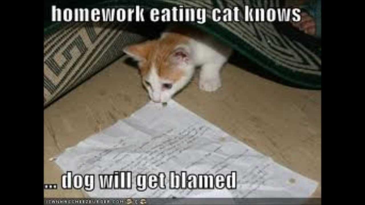 Epic Fail LOL Cat