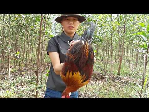 Lưới bẫy gà rừng - Bán lưới bẫy gà rừng lh 0933 244 493