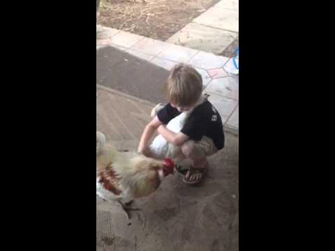 Pogledajte kako ovaj dečak voli ovu koku