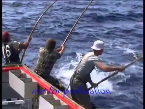 Câu cá biển Siêu cao thủ của các cần thủ nước ngoài