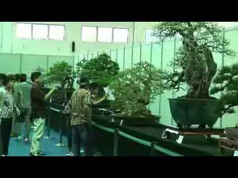 Bonsai Cina   Part 2 Ottava Guangdong, Hong Kong Bonsai Chencun)