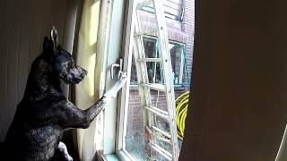 Dog unlocks window, sneaks out of house