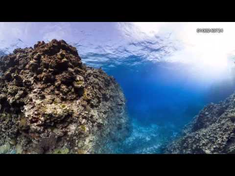 Myrmidon Reef T1 - 0100240001