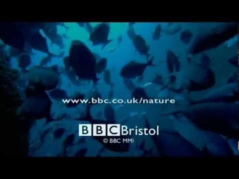 PROFUNDIDADES EN PELIGRO 4 de 4   BBC   Planeta Azul La Vida En Los Oceanos 09 de 10