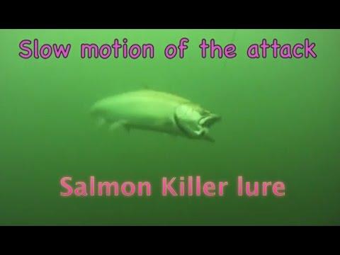 Underwater salmon Trolling wild Action GoPro