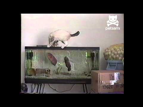 Riba napala mačku