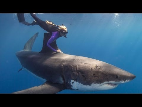 Swimming with GREAT WHITE SHARKS! The underwater WONDER WOMAN!