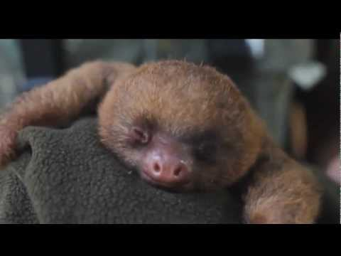 Cutest Animal Compilation 2013
