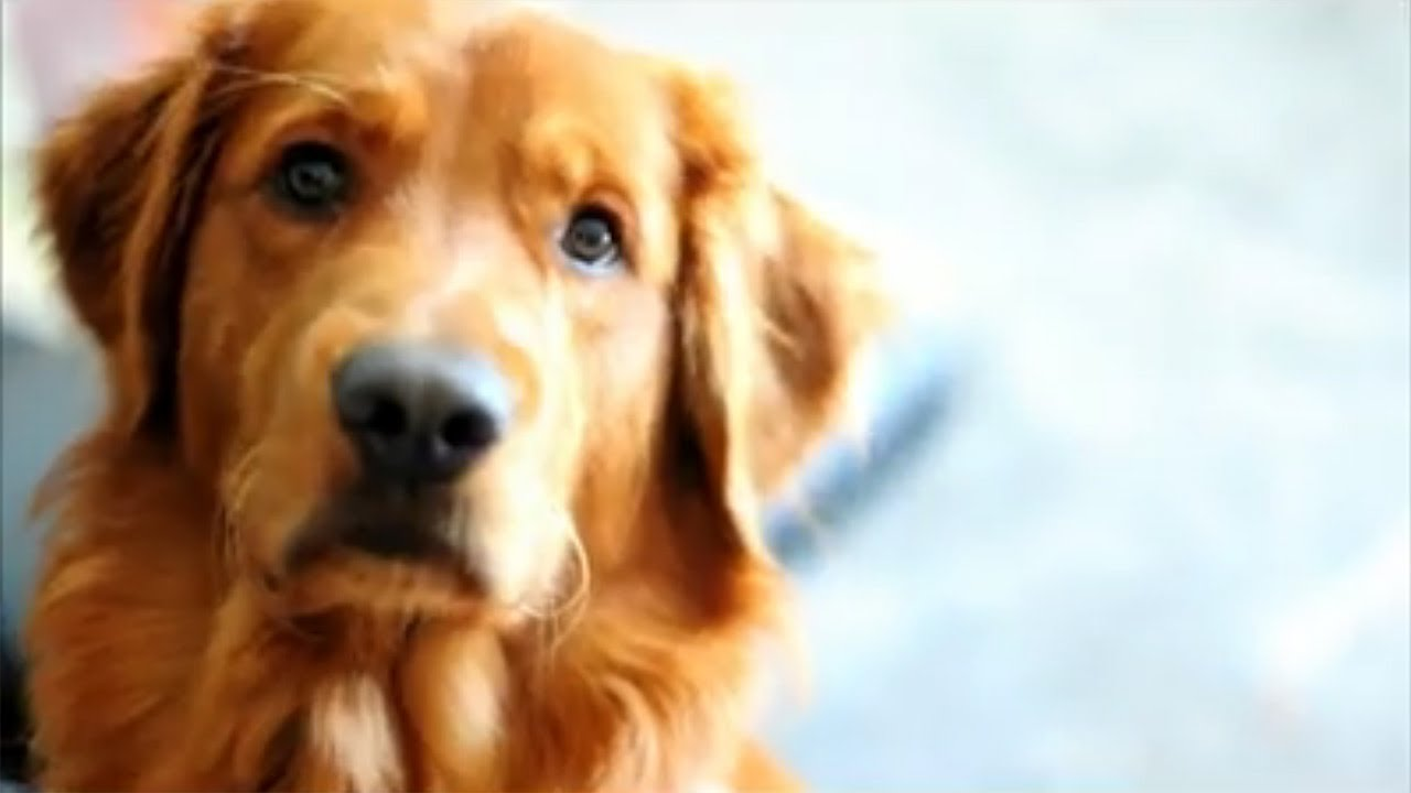 Dog Videos For Dogs Youtube