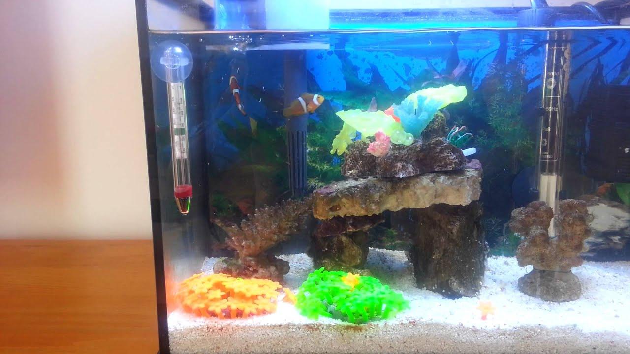 On peces para acuario de 20 litros