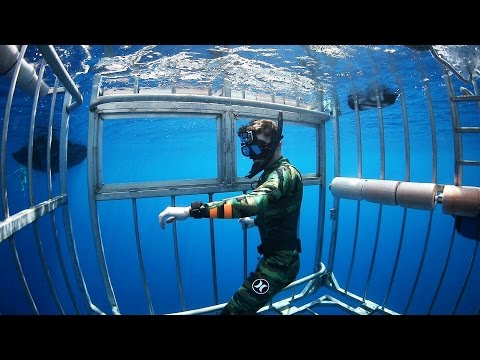 Swimming with Sharks Outside the Shark Cage! - Hawaii (Open Ocean)