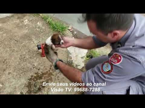 Bombeiros de Marília salvam filhote preso em tubulação