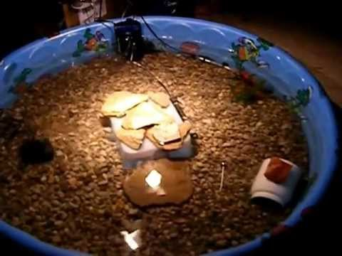 New indoor turtle pond youtube Diy indoor turtle pond
