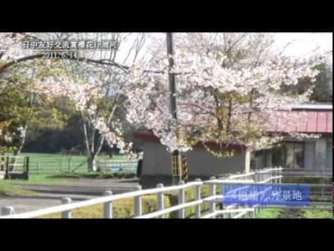 【The Power of Hokkaido】日中友好交流賞櫻花(浦河町)