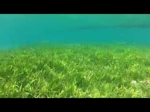 Brgy. Lo-oc Marine Protected Area