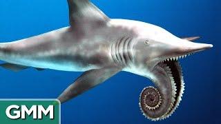 5 Craziest Looking Prehistoric Creatures   RANKED