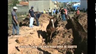 Cavalos caem em vala aberta pela Copasa em Pouso Alegre