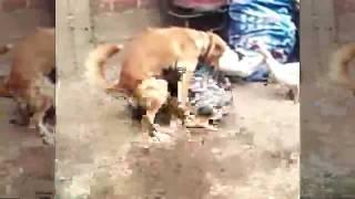 Perro Follando Con Pato