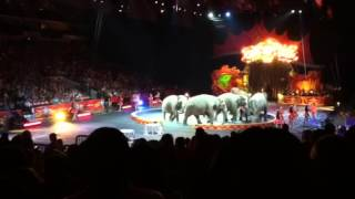 Ringling Bros. and Barnum Bailey Circus 2013 Elephants
