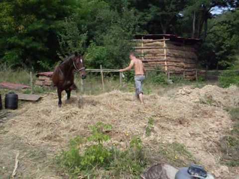 Лошадиный саман