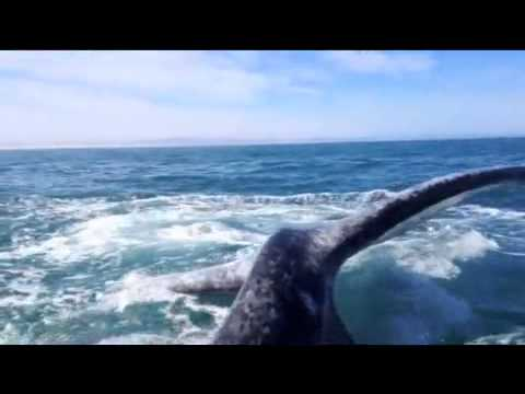 Girl gets slapped in the face by a whale