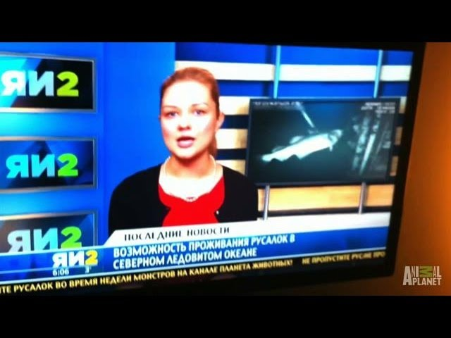 Mermaid Sighting on Russian Newscast | Mermaids