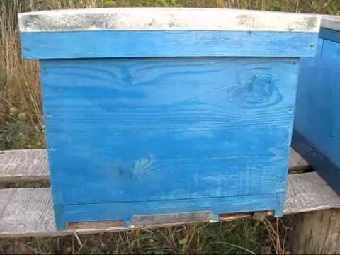 Tratament Varachet stup cu fund anti varroa