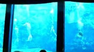 The Little Mermaid Part 1