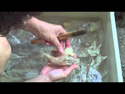 Preservación de huesos de pescado 1