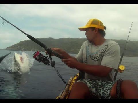 Un requin attaque la prise d'un pêcheur en kayak
