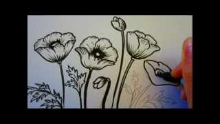 Flower Tutorial How To Draw Flowers Poppy Flowers