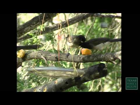 Birding: A Man in Paradise - Texas Parks and Wildlife [Official]