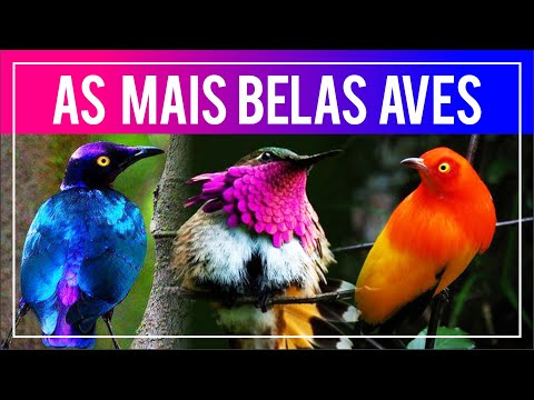As aves MAIS BONITAS do mundo!